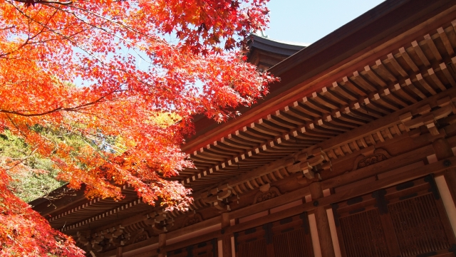 東福寺の紅葉2019の混雑状況や待ち時間、ライトアップと駐車場の混み具合