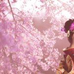 桜の花見スポット2019京都名所!開花予想と見頃満開時期、ライトアップ情報