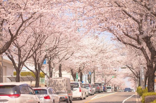 吉野山の桜2020の混雑予想や渋滞状況、交通規制の場所と所要時間