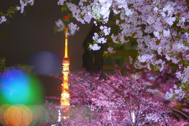 河津桜2019の関東東京名所!見頃時期と開花満開予想、ライトアップ情報