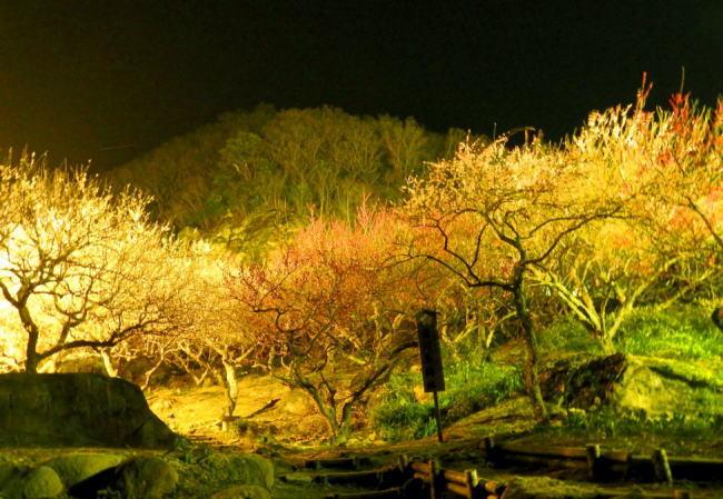 湯河原梅林ライトアップ