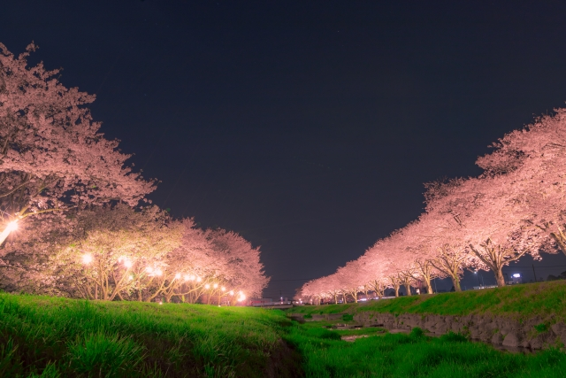 熊谷桜堤の夜桜ライトアップ