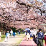 舞鶴公園桜祭りの花見2019の開花状況や見頃満開時期!ライトアップ、屋台出店