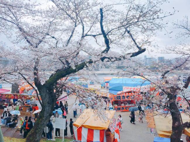 岡崎公園桜まつりの屋台出店売店情報
