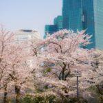 代々木公園の桜花見2019の混雑や場所取りとトイレの行列、待ち時間情報