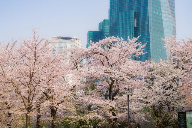 代々木公園の桜花見2020の混雑や場所取りとトイレの行列、待ち時間情報