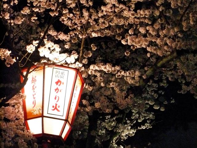 円山公園の夜桜ライトアップ