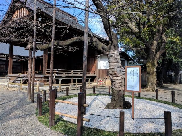 靖国神社の桜花見2020の混雑状況や場所取りの注意事項、標本木の混み具合