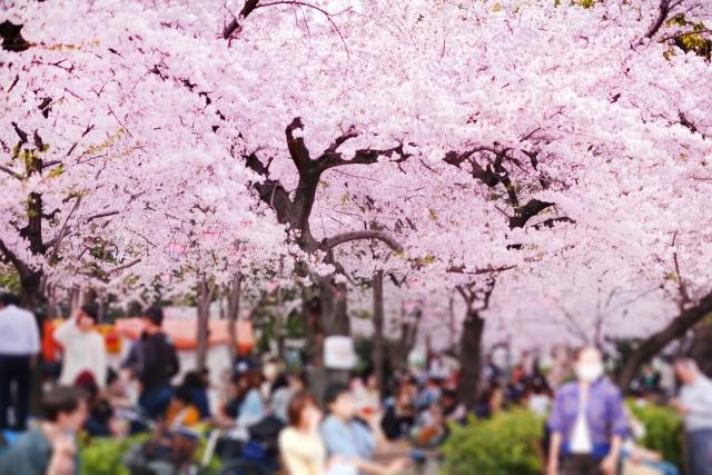 大宮公園桜祭りの花見2020の混雑や場所取り、トイレの行列、待ち時間情報
