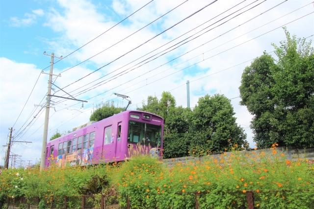 嵐電(京福電車)桜のトンネル