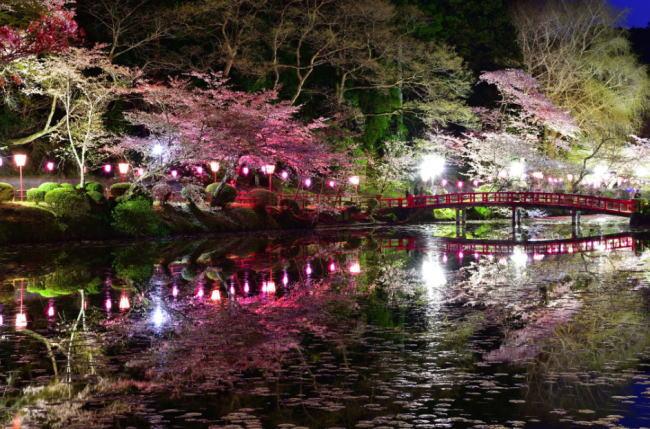 茂原公園の夜桜ライトアップ