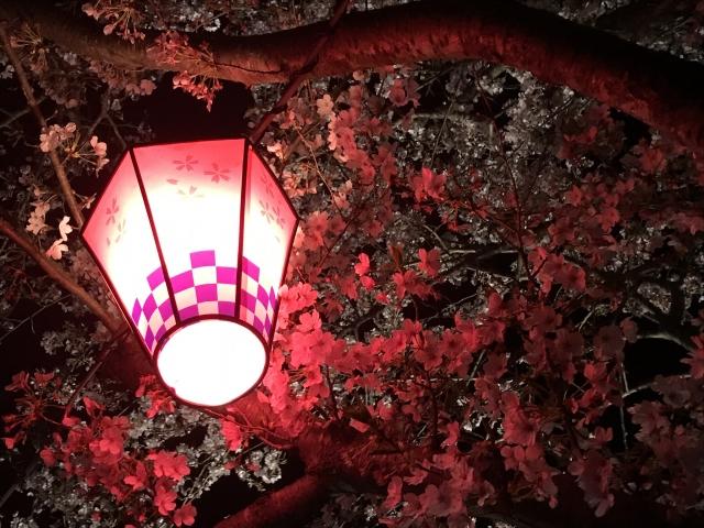 造幣局 桜の通り抜けの夜桜ライトアップ情報