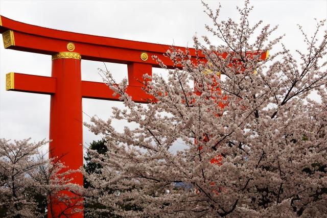 平安神宮の桜花見2019のライトアップ情報!見頃満開時期と開花状況、混雑予想