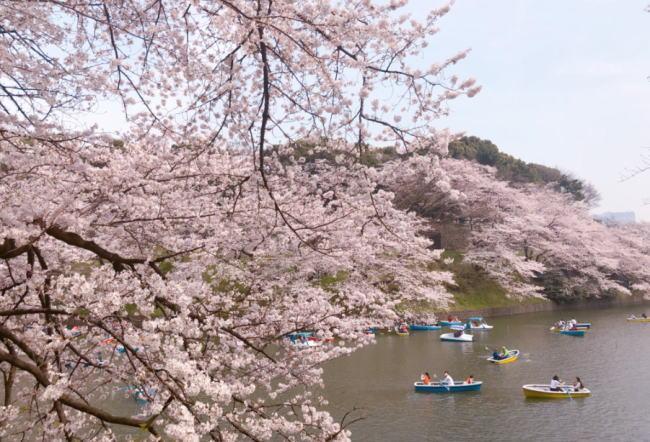 千鳥ヶ淵の桜花見2020の混雑やボートの待ち時間、トイレの行列、混み具合