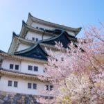 桜の花見スポット2019愛知名所!開花予想と見頃満開時期、ライトアップ情報
