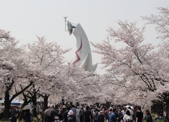 万博記念公園桜祭りの花見2020の混雑や場所取りの時間、駐車場の混み具合