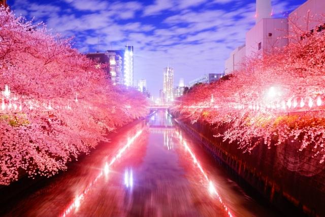 目黒川の桜花見2020の混雑や電車、最寄り駅の混み具合と交通規制情報
