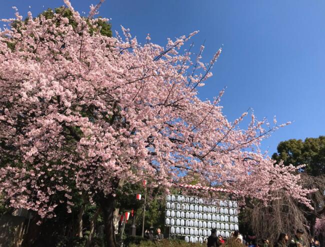上野公園の桜花見2020の混雑状況や場所取りの時間、駐車場の混み具合