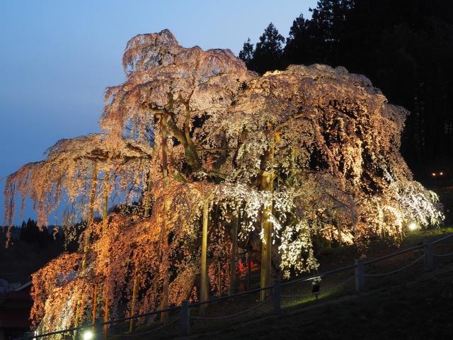 三春滝桜の夜桜ライトアップ