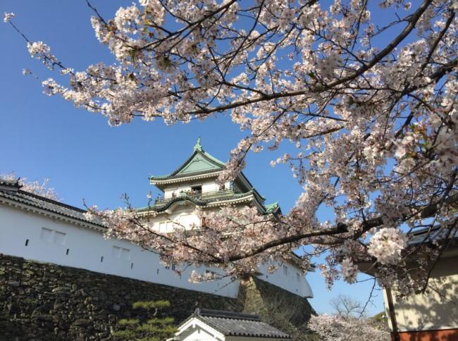 和歌山城桜祭りの花見2019の開花予想と見頃満開時期!ライトアップや屋台出店