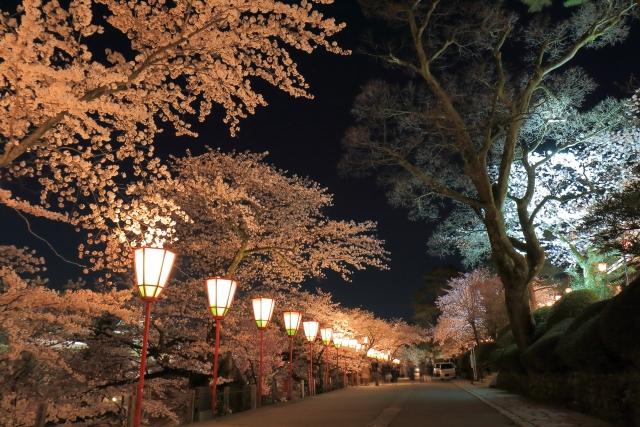 大宮公園の夜桜ライトアップ
