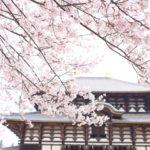 奈良公園の桜花見2019の開花情報と見頃満開!ライトアップや屋台出店、混雑