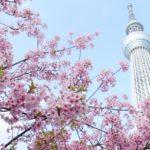 桜の花見スポット2019東京関東名所!開花予想と見頃満開時期、ライトアップ情報