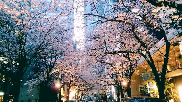 新宿御苑の夜桜ライトアップ