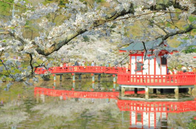 茂原公園桜祭りの花見2019開花状況と見頃時期!ライトアップ時間や屋台出店、混雑