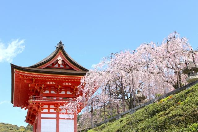 清水寺の桜花見2019の見頃満開時期と開花状況!ライトアップ時間や混雑