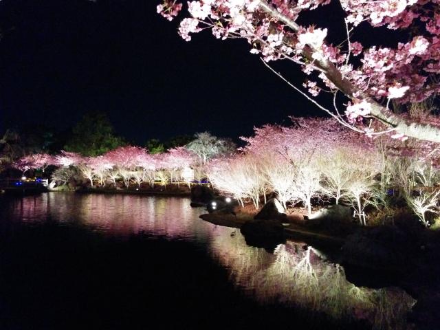 高田公園の夜桜ライトアップ情報