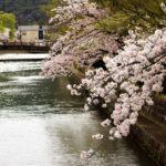 岡崎公園桜まつりの花見2019の見頃満開時期と開花状況!ライトアップと屋台出店