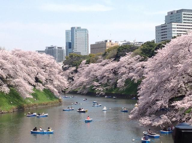 千鳥ヶ淵桜祭りの花見2020の見頃はいつから?開花状況と満開時期やライトアップ情報