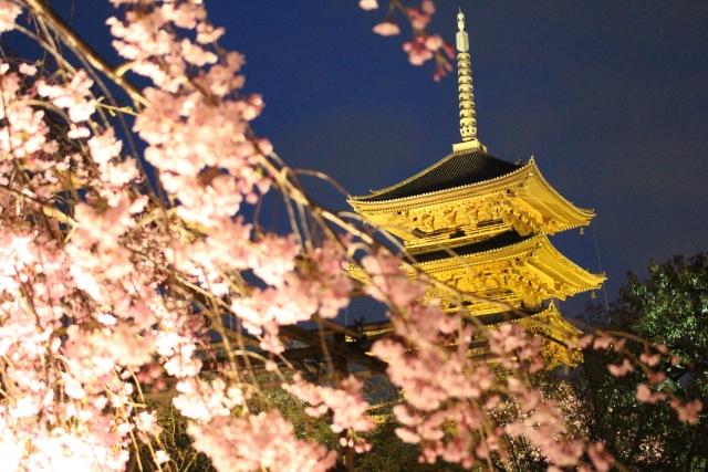 京都の桜ライトアップ2019でおすすめスポットはどこ?点灯時間や期間