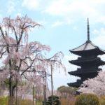 東寺の桜2019の見頃時期と開花状況、満開はいつまで?ライトアップ情報