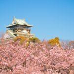 桜の花見スポット2019大阪関西名所!開花予想と見頃満開時期、ライトアップ情報