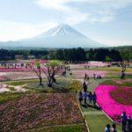 富士芝桜祭り2019の混雑状況や渋滞回避情報とGW、駐車場の混み具合
