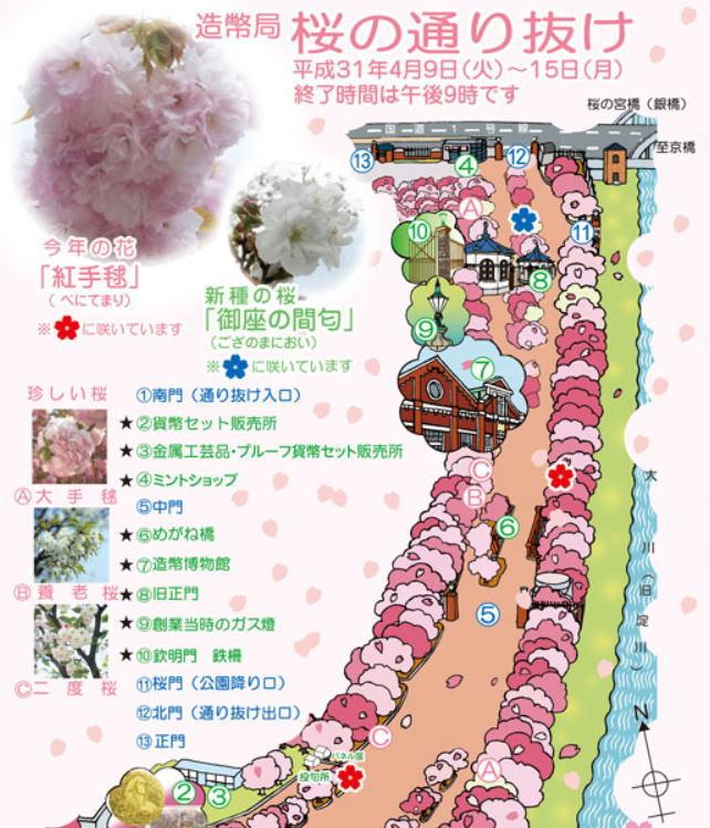 造幣局 桜の通り抜けの桜マップ