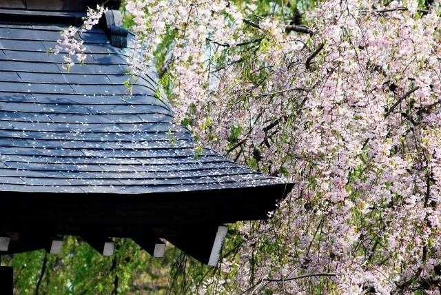 角館桜まつり