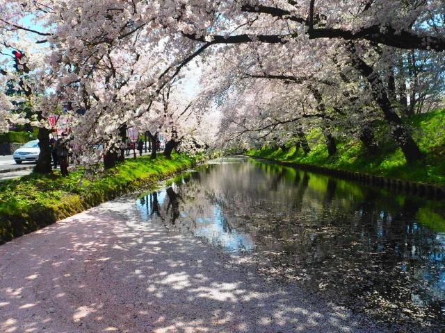 弘前桜祭り(弘前公園)2019の混雑や渋滞、来場者数と場所取り、駐車場情報