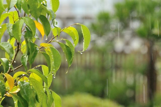 山鹿灯籠祭り納涼花火大会2019は台風で中止?雨でも開催?順延延期と天気予報