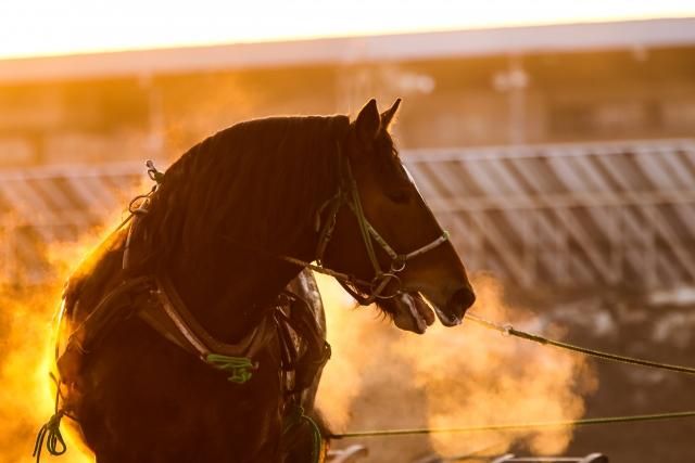 相馬野馬追2019の日程や野馬懸、甲冑競馬、神旗争奪戦の撮影ポイント