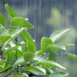 尾張津島天王祭2019は雨でも開催?雨天中止?台風情報と天気予報