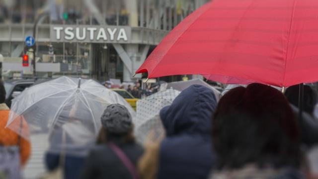 浅草サンバカーニバル2019は雨でも開催?雨天中止?順延延期や払い戻し情報