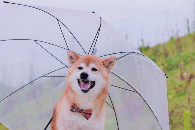 津軽花火大会2019は雨でも開催?雨天中止?順延、延期の有無や天気予報