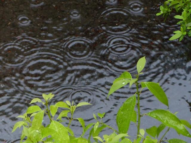 あいら市花火大会2019は雨天中止?雨でも開催か順延延期?台風情報と天気予報
