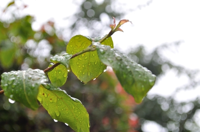 江津湖花火大会2019は雨でも開催?雨天中止?順延、延期の有無や天気予報